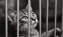 caged cat - from Google images
