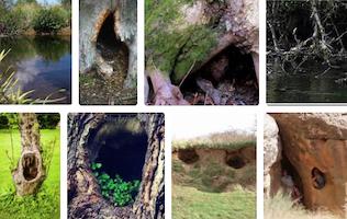 Hidey-holes